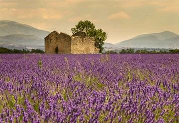 Provence-Alpes-Cote-d`Azur